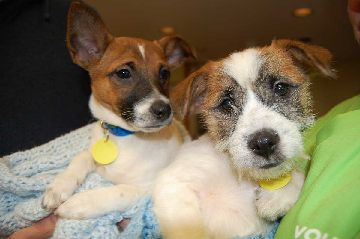 Puppies available for adoption at Wisconsin Humane Society Racine shelter
