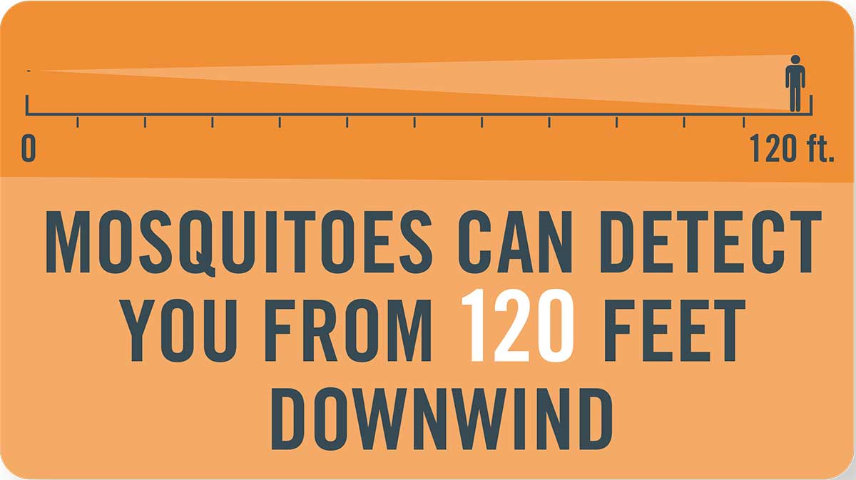 Mosquito tip: Mosquitoes can detect you from 120 feet downwind