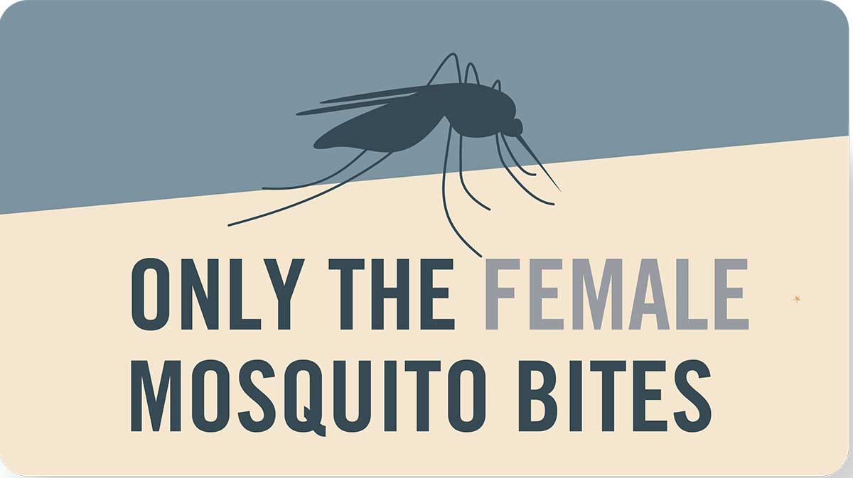 Mosquito tip: Only the female mosquito bites