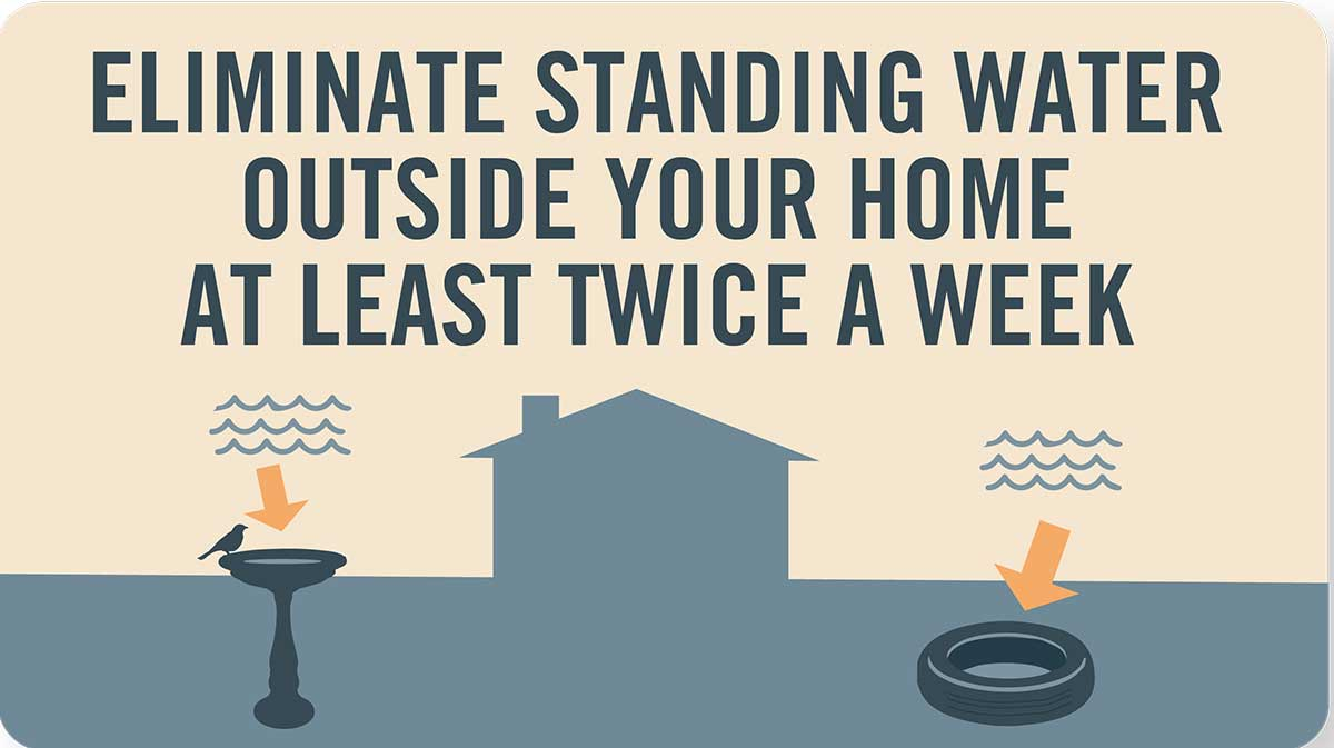 Mosquito tip: Eliminate standing water outside your home