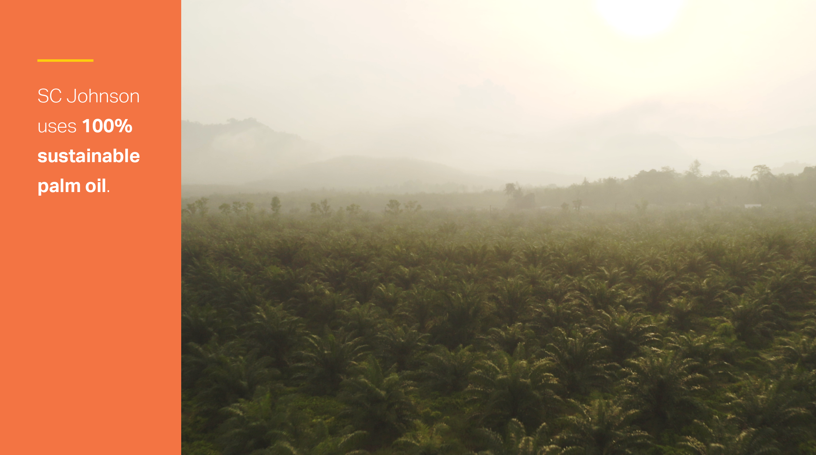 infographic tile: palm oil field. Text reads: SC Johnson uses 100% sustainable palm oil.