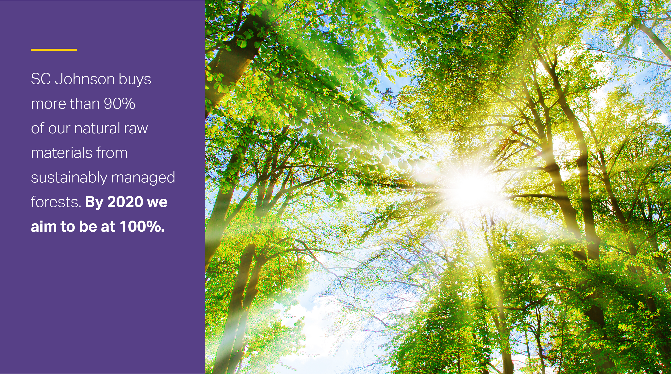 infographic tile: sun peering through the trees. Text reads: SC Johnson buys more than 90% of our raw materials from sustainably manager forests. By 2020 we aim to be at 100%.