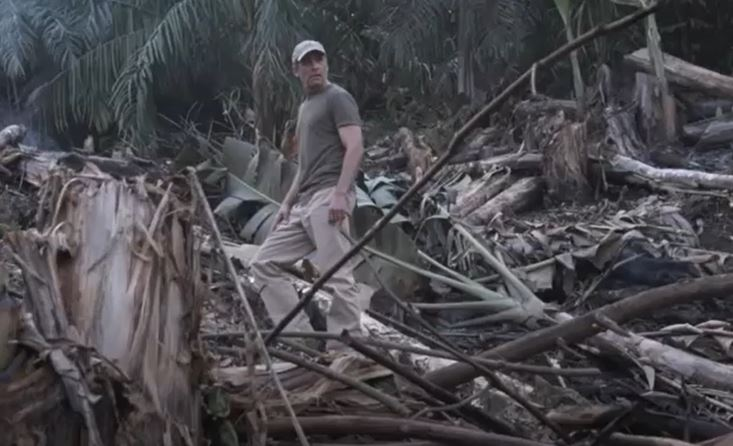 fisk looking at the effects of deforestation