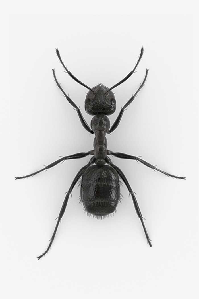 Entomologieforschung zu Ameisen