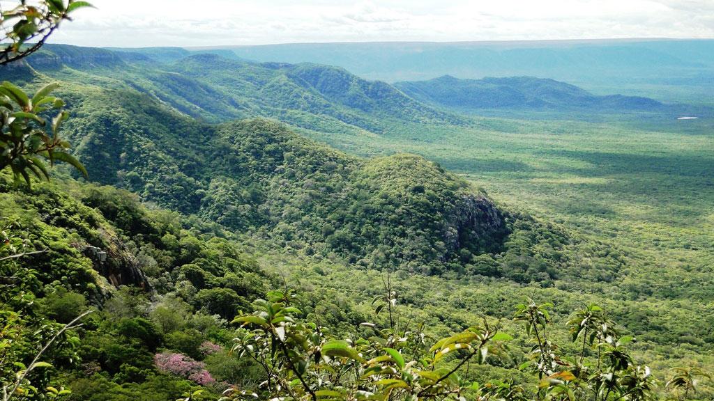 Braziliaanse beplanting van SC Johnson beschermt tegen ontbossing