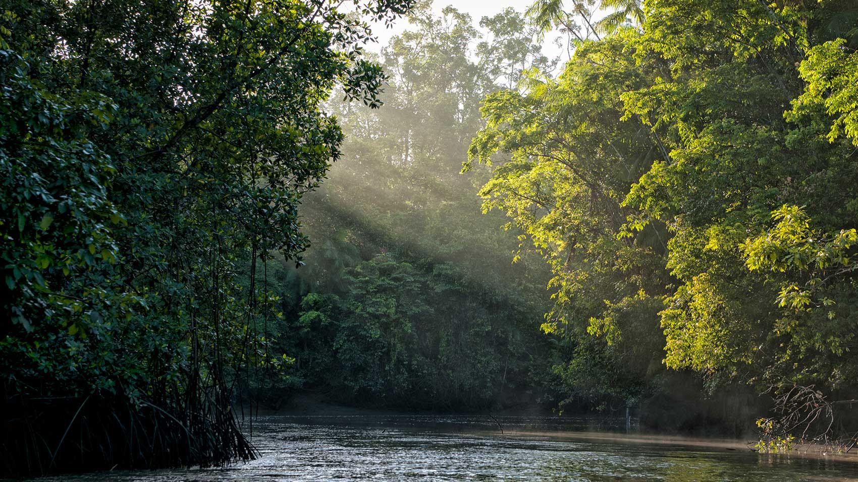 ในฐานะพันธมิตรด้านการอนุรักษ์SC Johnson และองค์กรอนุรักษ์สิ่งแวดล้อมนานาชาติ ทำงานร่วมกันเพื่อหยุดการตัดไม้ทำลายป่าในอเมซอน
