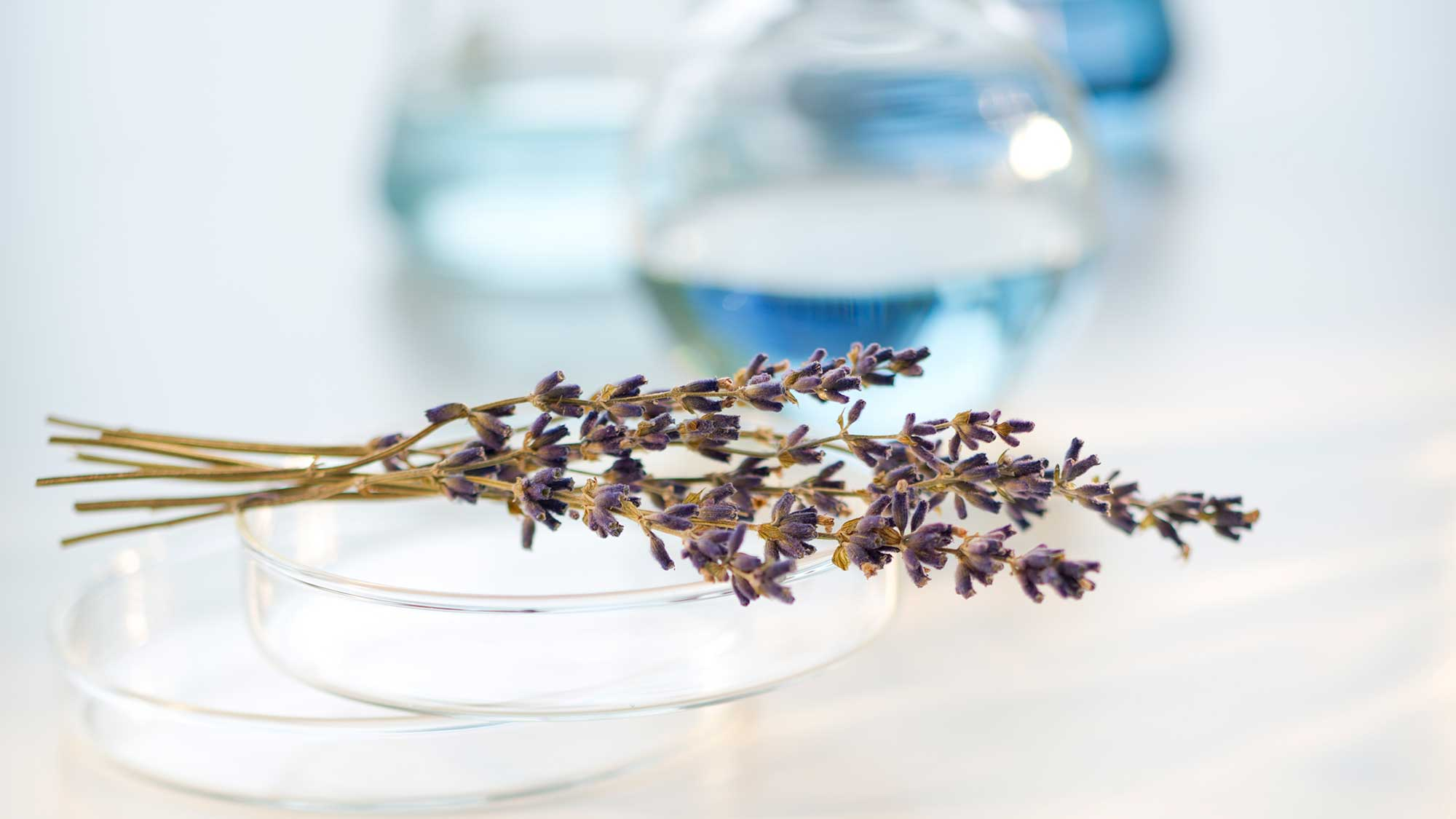 A lavender sprig and other potential ingredients.