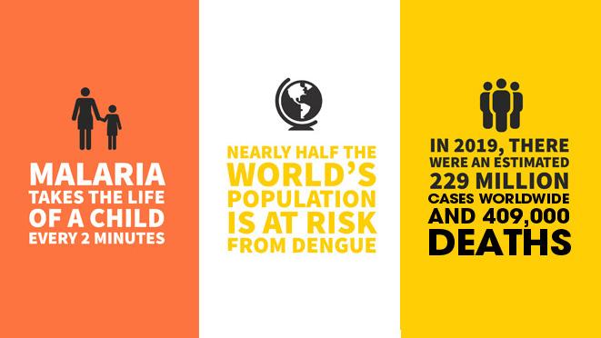 Mosquito Borne Diseases Infographics